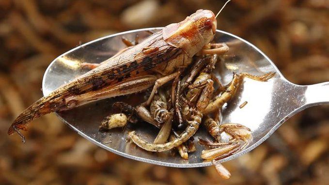 Manger-des-insectes-comestibles-c%u2019est-bon-pour-la-sante?-et-pour-la-plane?te-.jpg